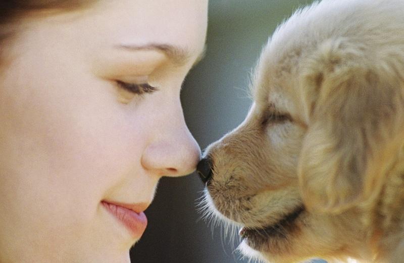 affidamento animali domestici separazione divorzio roma