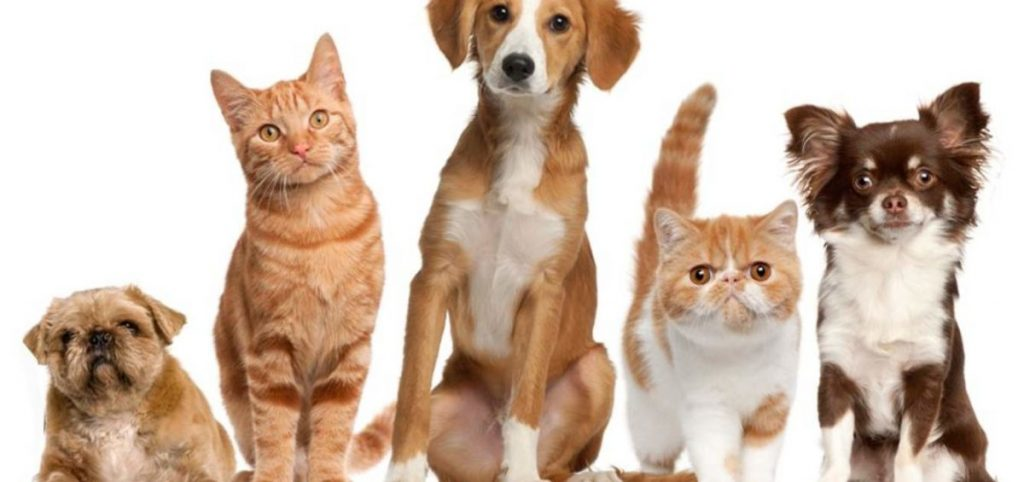 mantenimento animali domestici avvocato roma separazione